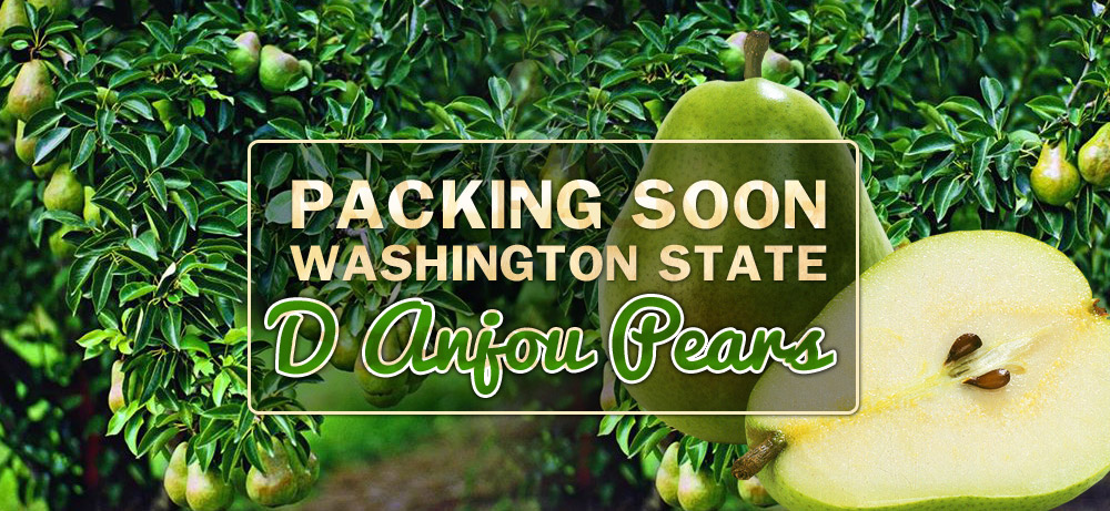 Washington Export Fresh Produce Products